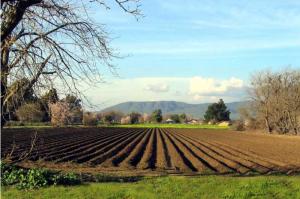 agricoltura1-300x199.jpg