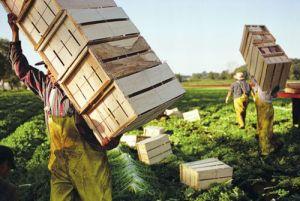agricoltura-lavoro-300x201.jpg