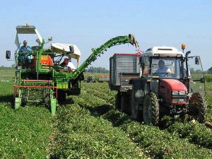 agricoltura-300x225.jpg